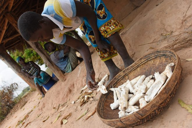 Person affected by leprosy Lidia from Mozambique is growing cassava